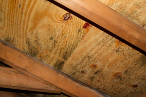 Mold growing on roof sheathing in Ellsworth attic